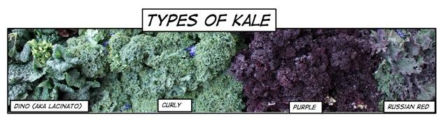 kale1