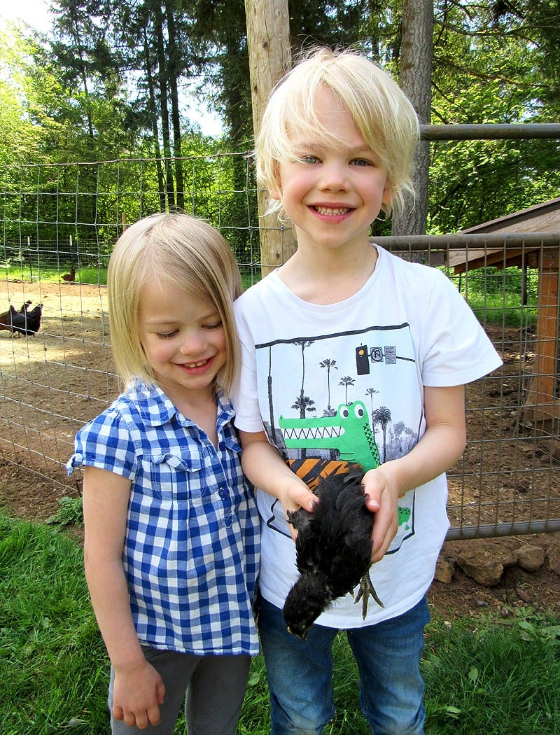 easy to peel hard boiled farm fresh eggs #chickens